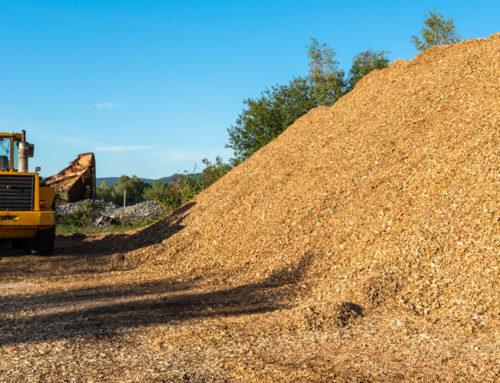 Biomasa: qué es, tipos, utilización y ventajas
